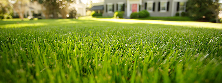Because Of Its Non Invasive Nature And Relative Low Maintenance, Fescue Is  A Popular Choice Of Grass For Lawns All Across The Country.