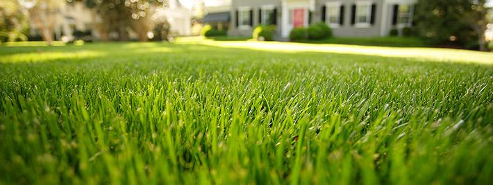 Healthy Lawn Tips Rescue Your Fescue Stihl Usa