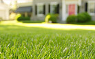 Keep Your Fescue Lawn Looking Great