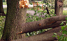 Tips for Tree Care and Storms