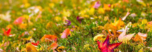 Leaf Removal - How To Remove Fall Leaves From Your Yard and Gutters