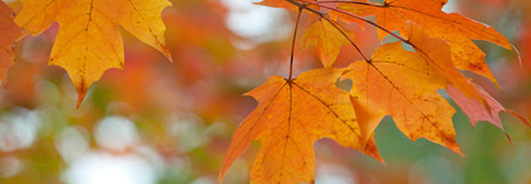 Fall leaf colors - The myths &facts of why leaves change color